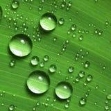 De druppeltjes van het water op blad Royalty-vrije Stock Foto