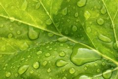 De druppeltjes van het water op blad Stock Afbeelding