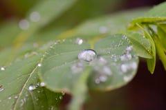 De druppeltjes van het water op bladeren Stock Foto