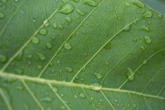 De druppeltjes van het water op bladeren Royalty-vrije Stock Afbeelding