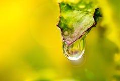 De druppeltjes van het water op bladeren Stock Afbeelding