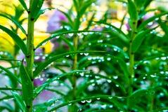 De druppeltjes van het water op de bladeren Stock Afbeeldingen