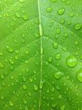 De druppeltjes van het water op de bladeren Royalty-vrije Stock Afbeelding