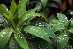 De druppeltjes van het water op een blad royalty-vrije stock afbeelding