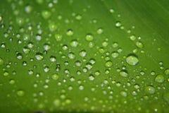De druppeltjes van het water op een blad Royalty-vrije Stock Foto's