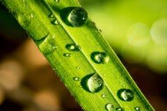 De druppeltjes van het water op een blad Stock Foto