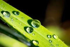 De druppeltjes van het water op een blad Stock Afbeeldingen