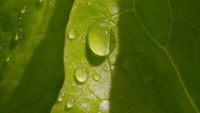 De druppeltjes van het water op een groen blad stock videobeelden