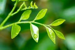 De druppeltjes van het water op een groen blad Stock Foto