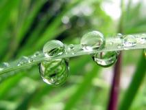 De druppeltjes van het water op een installatieblad Stock Foto