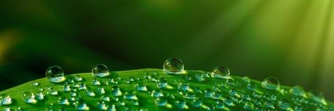 De druppeltjes van het water op gras royalty-vrije stock foto