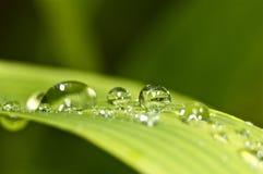 De druppeltjes van het water op groen gras Stock Afbeelding