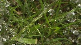 De druppeltjes van Regen het Gieten neer op het Gazon schoten op Spoor en Laowa stock videobeelden