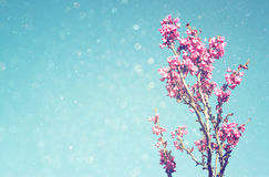 De dubbele blootstelling van de Lentekers komt boom tot bloei abstracte achtergrond het dromerige concept met schittert bekleding Royalty-vrije Stock Foto's
