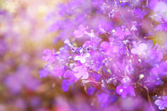 De dubbele blootstelling van roze en purpere bloemen bloeit, creërend abstracte en dromerige foto Stock Foto