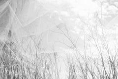 De dubbele blootstellingsfoto van boom vertakt zich in daling tegen hemel en geweven stoffenlaag Stock Foto's