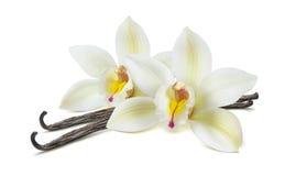De dubbele die peulen van de vanillebloem op wit worden geïsoleerd stock fotografie