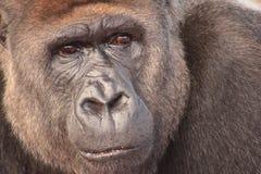 De dubieuze aap van Rome royalty-vrije stock foto's