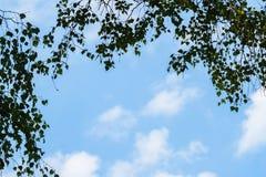 De duidelijke blauwe hemel en de lichte pluizige witte die wolken door boom wordt omringd vertakken zich met groene bladeren Spec Stock Afbeelding