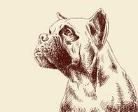 De duidelijke hond van de fawnbokser Royalty-vrije Stock Fotografie