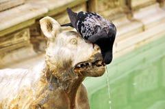 De duif drinkt water (fragment van fontein) Royalty-vrije Stock Foto's