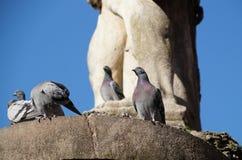 De duif drinkt water van hondenstandbeeld stock afbeelding