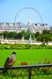 De duif en het wiel Royalty-vrije Stock Afbeelding