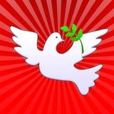De duif van Pasen met olijftak Stock Fotografie