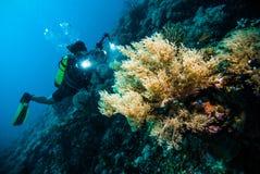De duiker neemt een video op het vrij duiken van koraal kapoposang Indonesië Royalty-vrije Stock Fotografie