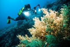 De duiker neemt een video op het vrij duiken van koraal kapoposang Indonesië Royalty-vrije Stock Foto's