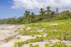 De Duinen en Hotel Nosara van Playaguiones Stock Foto