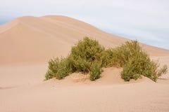 De duinen van de Vallei van de dood  Royalty-vrije Stock Fotografie