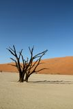 De duinen van de woestijn en dode boom Stock Foto