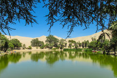 De duinen van de zandwoestijn en groene oase stock foto's