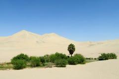 De duinen van de zandwoestijn en groene oase met struiken en palm royalty-vrije stock afbeeldingen