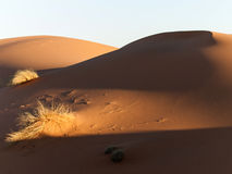 De duinen van het zand bij zonsondergang stock afbeelding