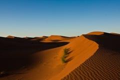 De Duinen van het zand in de ochtendzon Royalty-vrije Stock Afbeeldingen