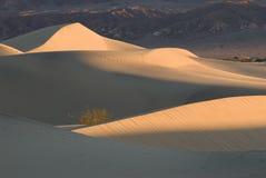 De duinen van het zand in de Vallei van de Dood bij zonsopgang Royalty-vrije Stock Afbeeldingen