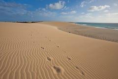 De duinen van het zand dichtbij de oceaan Royalty-vrije Stock Foto