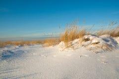 De duinen van het zand die met sneeuw worden behandeld Stock Fotografie