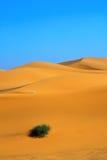 De duinen van het zand en een eenzaam bosje van gras Royalty-vrije Stock Afbeeldingen