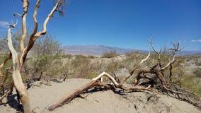 De duinen van het zand in het Nationale Park van de Vallei van de Dood Stock Afbeelding