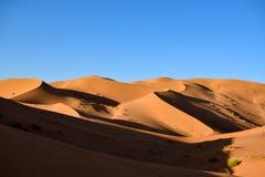 De duinen van het zand in de woestijn van de Sahara Stock Foto