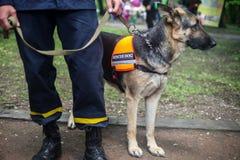 De Duitse herder van de reddingshond met een redder in de straat stock foto