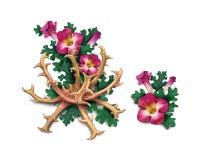 De duivels` s Klauw Harpagophytum procumbens, of grijpt installatie, hout vast stock illustratie