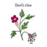 De duivelss Klauw Harpagophytum procumbens, of grijpt installatie, houten spin vast Stock Afbeeldingen
