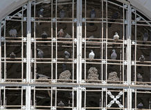 De duiven stock afbeeldingen