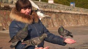 De duiven eten met de handen van een vrouw stock footage