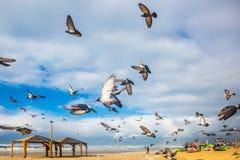 De duiven het is lawaaierig vertrekt van zandig strand stock foto