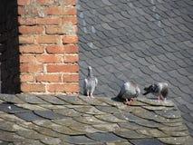 De duiven op het dak Royalty-vrije Stock Afbeelding
